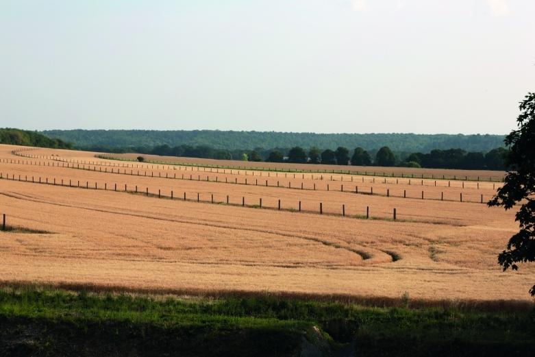 Agroforesterie, la place de l'arbre dans l'agriculture