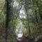 MORCELLEMENT FORESTIER : la forêt privée s'organise