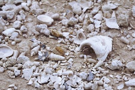 Réserve naturelle des sites géologiques de l'Essonne