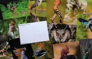 cartes-postales-vrac-web