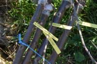 Vergers 200 arbres fruitiers
